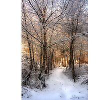 Deer Path in the Snow Photographic Print