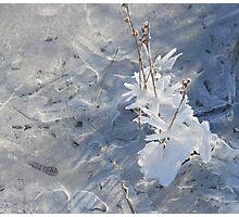 Winter Garden II Photographic Print