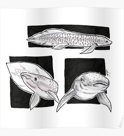 Australian Lungfish Poster