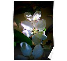 Sunlit Blossoms Poster