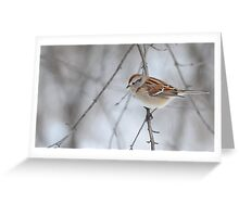 The tree sparrow Greeting Card