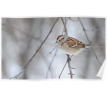 The tree sparrow Poster