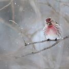 Beautiful in pink! by Jeannine St-Amour