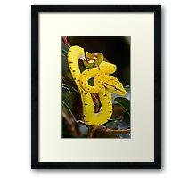 Baby Green Python Framed Print