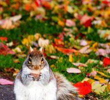 Squirrel in Hyde Park in Boston , Ma. USA Sticker
