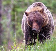 Big Mama Grizzly by JamesA1