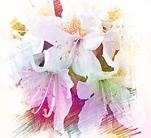 Beautiful color pencil sketch white azalea flowers. floral photo art. by naturematters