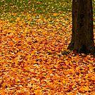 Autumn's Dancing Carpet ©  by © Hany G. Jadaa © Prince John Photography