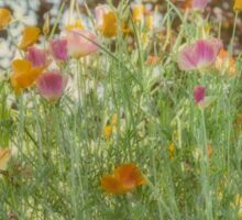 Field Poppies Sticker