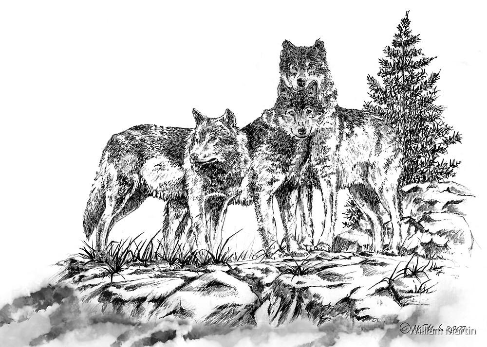 Wolf Ridge Timber Wolf Illustration by William Martin