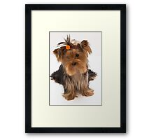Sweet Yorkie Puppy Framed Print
