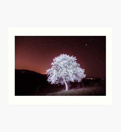 Tree in bloom at night Art Print