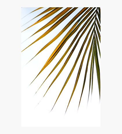 Exotic Palm tree 1 Photographic Print