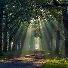 An autumn morning by Adri  Padmos