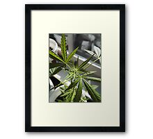 Beautiful plant Framed Print