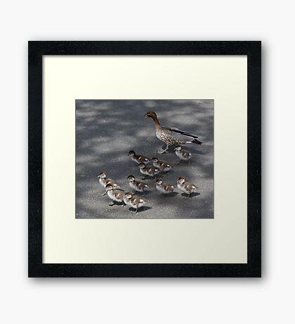 Marching Ducklings Framed Print