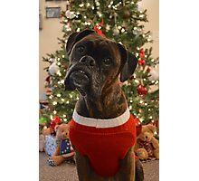 Christmas Boxer Photographic Print