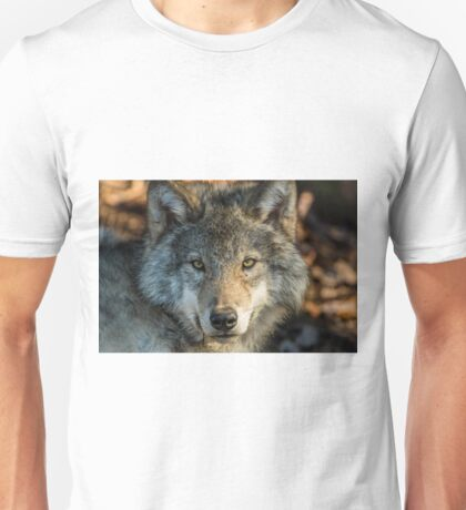 Timber Wolf - Looking at you. T-Shirt