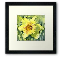 Yellow Daffodil Flower - Watercolours Framed Print