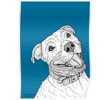 Staffordshire Bull Terrier Portrait Poster