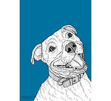Staffordshire Bull Terrier Portrait Photographic Print