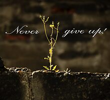 Survivor - never give up! by GryThunes