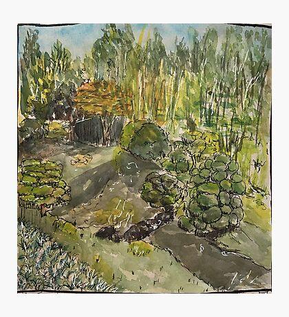 San Francisco Japanese Tea Garden Photographic Print