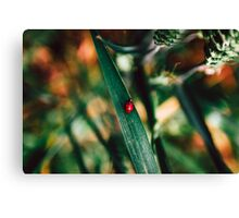 Ladybug in Wheat Field Canvas Print