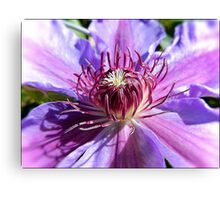 Heart of a Clematis Flower Canvas Print