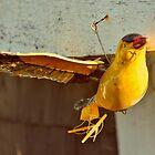 Fly Away Birdie by Kathleen Daley