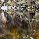 Leaves on the move, River Garry, Killikrankie, Scotland by Cliff Williams