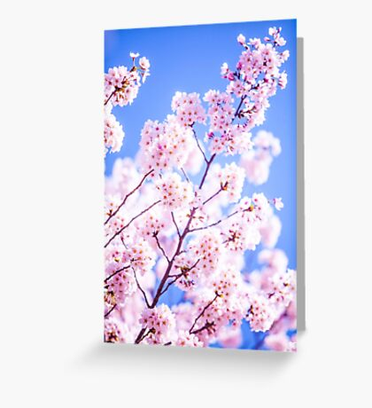 Cherry Blossom, Philosopher's Path, Kyoto, Japan Greeting Card