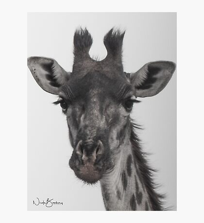 Endearing by Nature Photographic Print