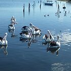 *Pelicans at Werribee South Beach - Vic. Aust.* by EdsMum