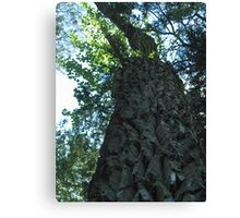 Be Humble - Trail of the Cedars Glacier National Park Canvas Print