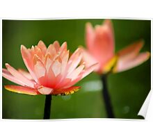 Water Flower Coral Peach Floral Art Poster