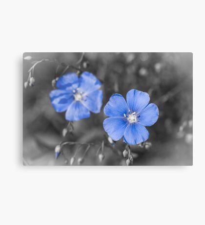 Gentle Blue Flower Canvas Print