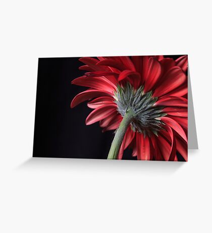 Red Gerbera Daisies Flower Greeting Card