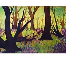 Bluebell Woods Ink Sketch Photographic Print