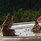 Birds in a Fountain, New York City by lenspiro
