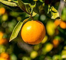Lucious orange by dkPimage