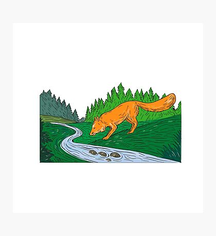 Fox Drinking River Woods Creek Drawing Photographic Print