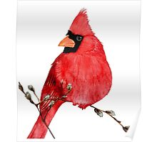 Cardinal Amongst The Pussy Willows  Poster