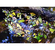 Colorful leaves and flowers floating on water Photographic Print