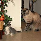 Cat 1 by Albert1000