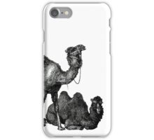 Funny Camels One Hump or Two iPhone Case/Skin