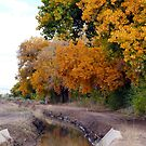 Upper Acequia by © Loree McComb