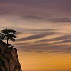 Tree on Cliff by jasonksleung