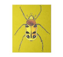Insect drawing Gallery Board