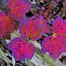 Maple Reds by Eileen McVey